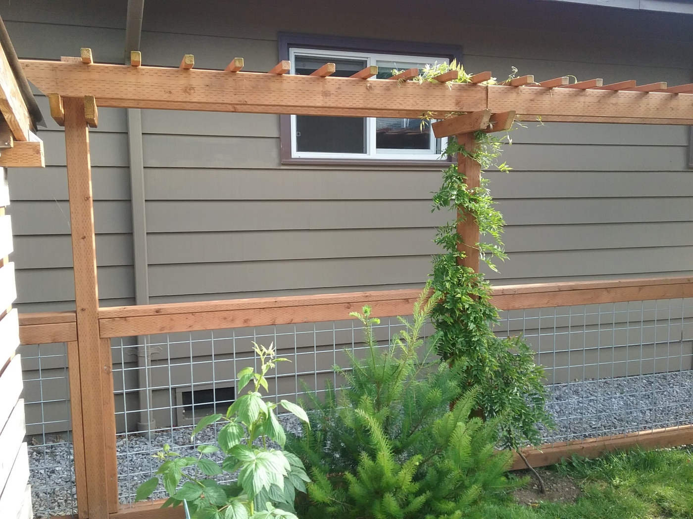 Brwarrickengineering i built an arbor for this part of the fence the wisteria is just starting to grow solutioingenieria Image collections